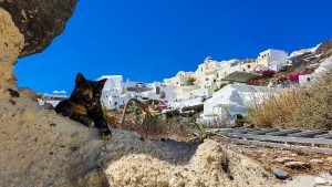 A cat hiding in shade by the stairs to the Armeni Port
