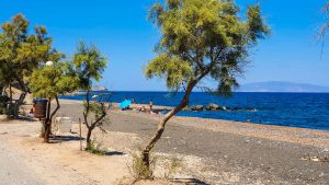 Trees on Vourvoulos Beach